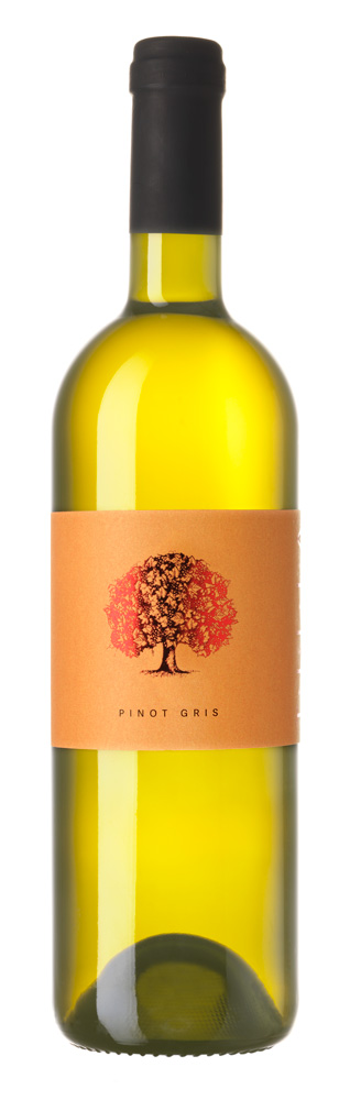 Pinot Gris, Sončna Tilia 2018