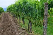 Tilia Estate en wijnmaker Matjaz Lemut