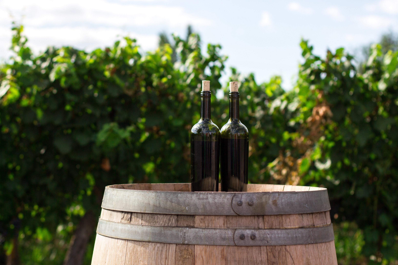 Kolumna Matjaža Lemuta: Dve vinski kulturi, dva pristopa k vrednotenju vina!