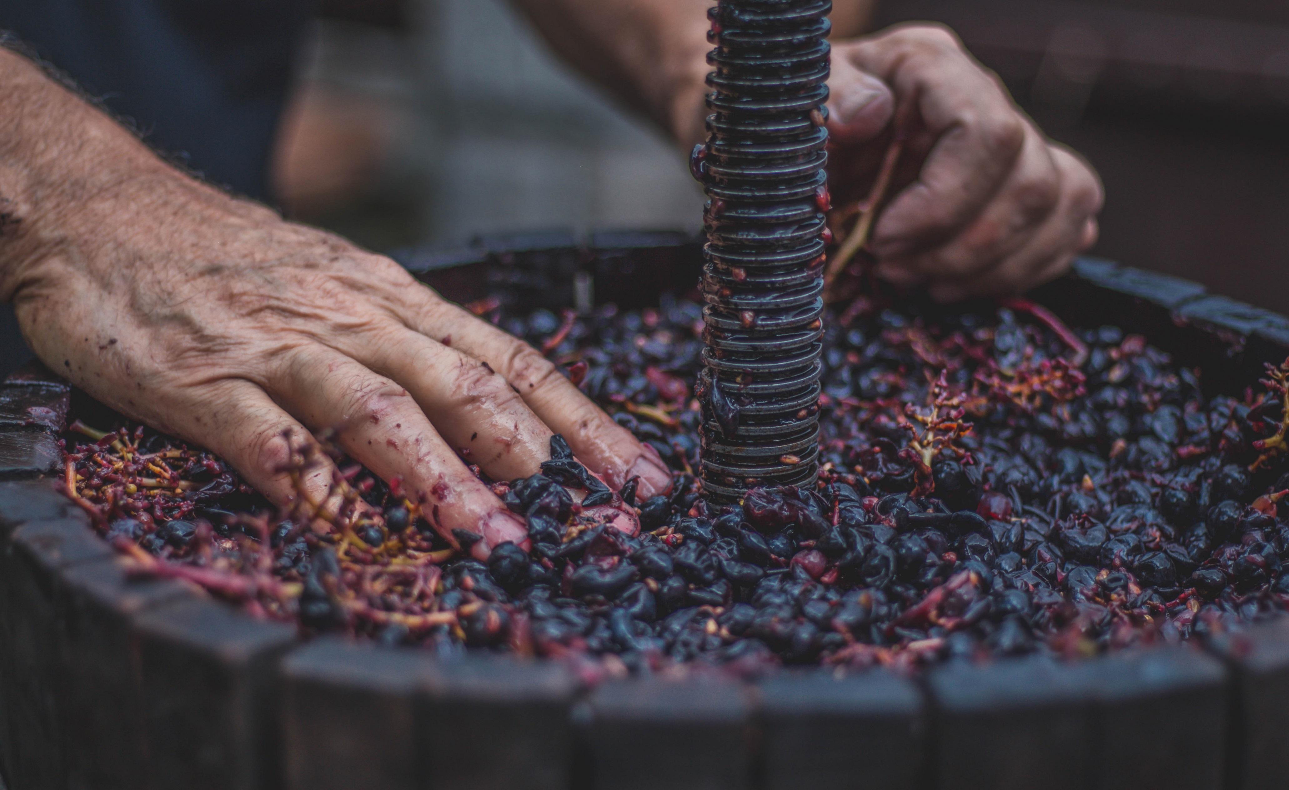 Kolumna Matjaža Lemuta: Spoznaj svoje zmožnosti, šele nato prideluj vino!